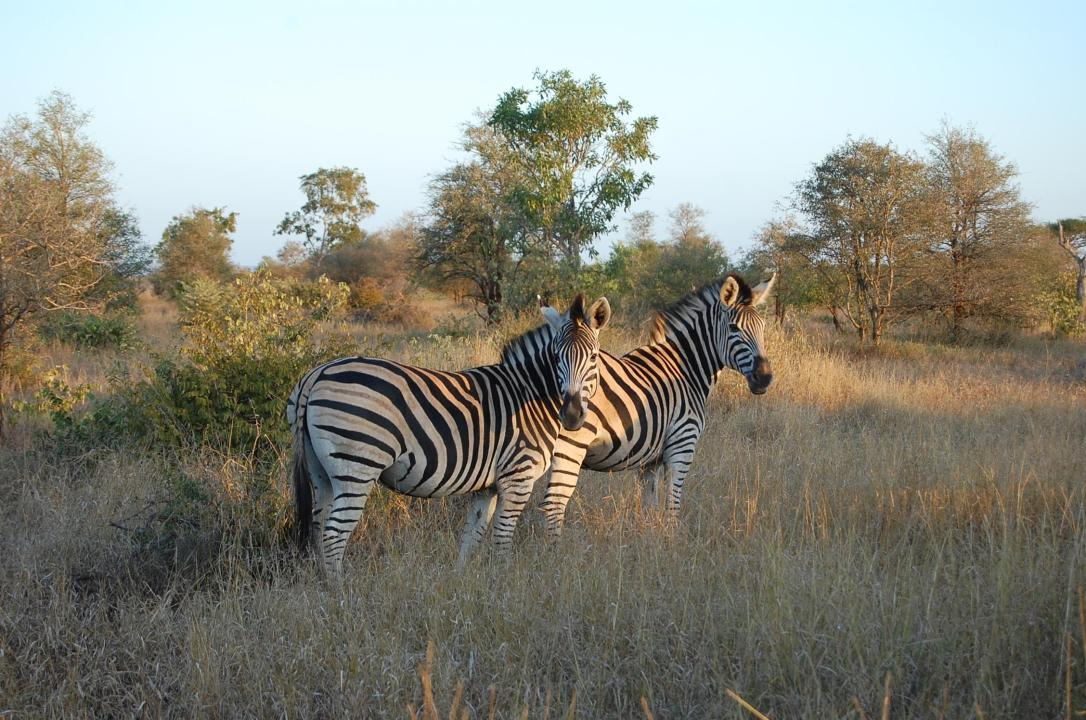 Nkembeni Safari Camp.jpg 2